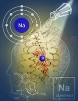 Scientists Solve 40-year Mystery of How Sodium Controls Opioid Brain Signaling | A Tale of Two Medicines | Scoop.it