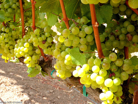 Everyone's talking about American Wine – an overview for the newbie   Kat's edible journey   Scoop.it