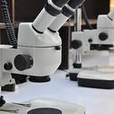 El MIT lanza el 'Google de los genomas' | Ciència | Scoop.it