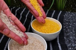 Why Organic Advocates Should Love GMOs : Collide-a-Scape   A Better Food System   Scoop.it