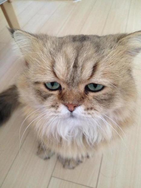 PHOTOS: He's Got 99 Problems But Grumpy Ain't One | Les chats c'est pas que des connards | Scoop.it