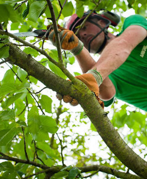 Keep Your Tress Happy And Healthy With Tree Surgery Services! | Superior Garden Related Services In UK | Scoop.it