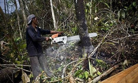 Deforestation: is it time for a new strategy to save the world's rainforests?   Sustainable Futures   Scoop.it