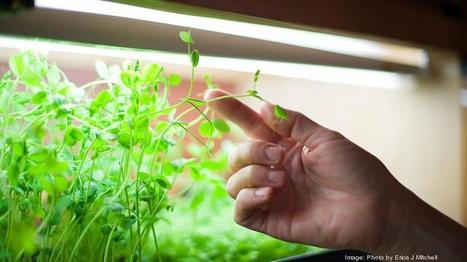 USA - Portland aquaponics firm launches salad subscription and expands team   Aquaponics in Action   Scoop.it