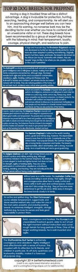 TOP 10 DOG BREEDS FOR PREPPING | bug out bag / survivalist | Pinterest | ApocalypseSurvival | Scoop.it