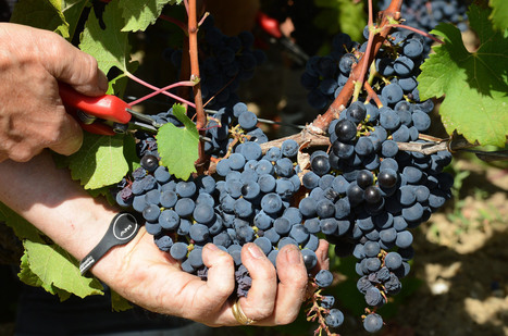 With Warming Climes, How Long Will A Bordeaux Be A Bordeaux? | Vitabella Wine Daily Gossip | Scoop.it