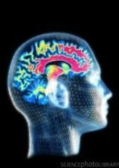 How the Brain Creates a Dependence On Opioids - PsychCentral.com (blog) | Physics+neuroscience+cancer+imaging process | Scoop.it