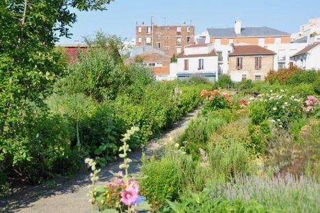 Le potager des Lilas : Un jardin pour transmettre son savoir | Les colocs du jardin | Scoop.it