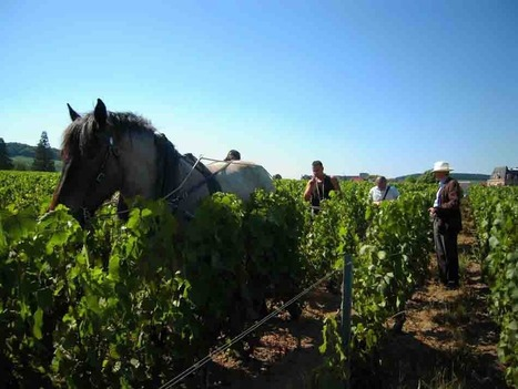 Le Champagne Louis Roederer confirme son engagement dans la Biodynamie | Blog du Champagne - Culture et information des vins de Champagne | champagne & marketing | Scoop.it
