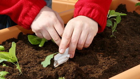 Jak pěstovat zeleninu na balkoně asklidit velkou úrodu?    Prima Living   Miesta Premeny   Scoop.it