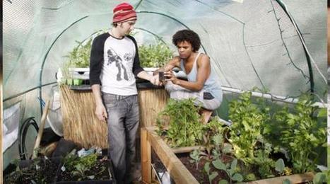 Aquaponics: Rethinking the Veggie Garden - Topanga Messenger | Vertical Farm - Food Factory | Scoop.it