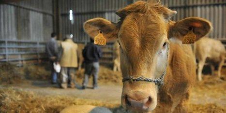 Agriculture : un éleveur sur dix est au bord du dépôt de bilan | Le Fil @gricole | Scoop.it