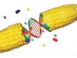 Transgénicos avanzan en Latinoamérica a pesar de detractores ...   Stop Monsanto   Scoop.it
