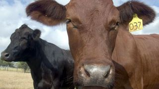 The drive for grass-fed beef - Fox News | Pasture raised, Grass fed Pigs | Scoop.it
