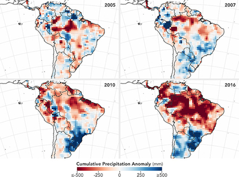 Yale Environment 360: Following El Nino, Amazon At Risk of Intense Wildfire Season | Rainforest EXPLORER:  News & Notes | Scoop.it