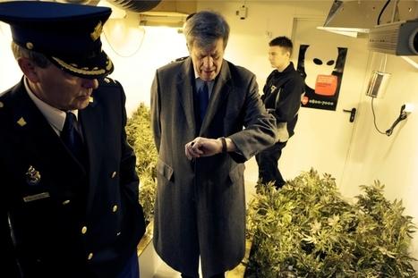 'Internationaal is reguleren van wiet geen probleem' | Cannabisclub | Scoop.it