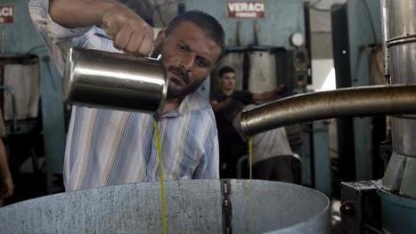 Duizenden tonnen 'foute' Italiaanse olijfolie onderschept | La Gazzetta Di Lella - News From Italy - Italiaans Nieuws | Scoop.it