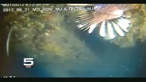 Invasive Fish Found in South Texas | KRGV.com | CHANNEL 5 NEWS | Breaking News Breaking Stories | Sustainability & Us | Scoop.it