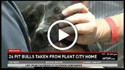Two dozen pit bulls found stuffed into makeshift kennels on Florida property; evidence of fighting also discovered (VIDEO) | Should Pit Bulls Be Kept As Pets | Scoop.it
