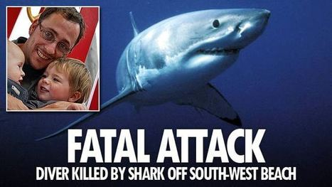 Diver killed by shark off Busselton in Western Australia | The Shark Narrative | Scoop.it