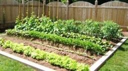 Consejos para hacer un huerto ecológico en cualquier lugar « Productos Ecológicos Sin Intermediarios | Actualidad forestal cerca de ti | Scoop.it
