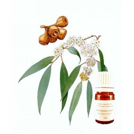 Comment mater son rhume avec les huiles essentielles | zazaone | Huiles Essentiels | Scoop.it