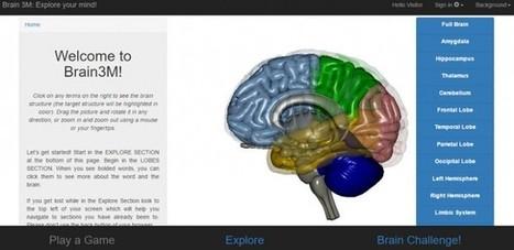 Brain3M, plataforma interactiva para estudiar la anatomía y funciones del cerebro | Ingeniería Biomédica | Scoop.it