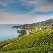 Los viñedos más bonitos del mundo | Noticias del sector | Scoop.it