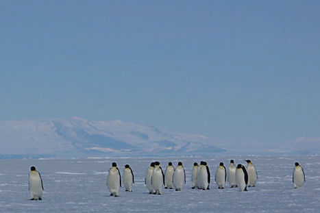 East Antarctic ice shelves melting at surprising pace, study suggests   Antarctic research   Scoop.it