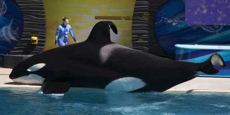 SeaWorld Visits Are Tumbling | Scott's Linkorama | Scoop.it