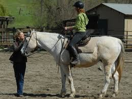 How to Teach a New Rider the Basics of Riding   Horse and Rider Awareness   Scoop.it