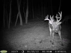 17 point on my uncles camera a while ago. Thought you guys would enjoy the pic. :) • /r/Hunting | Nova Scotia Hunting | Scoop.it
