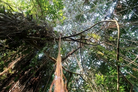Biosphere 2 researchers research climate change in Arizona's only rainforest | CALS in the News | Scoop.it
