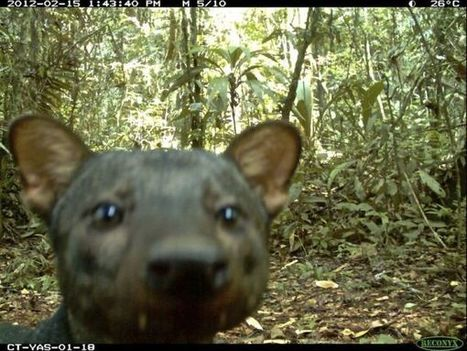 Protected areas DO save wildlife: Just ask these 5 species – Human... | Conservation Success | Scoop.it