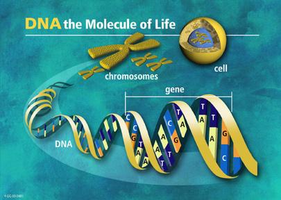 Biotechnology revolution unlocks riches | yoga | Scoop.it