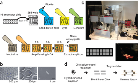 Massively parallel polymerase cloning and genome sequencing of single cells using nanoliter microwells (Nature biotechnology 2013) | biotechnology | Scoop.it