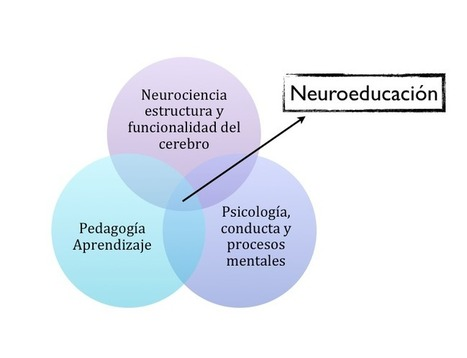 Neuroeducación el pasaporte a la Educación RED | A Educação Hipermidia | Scoop.it