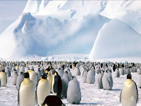Free Penguins Backgrounds For PowerPoint - Animal PPT Templates   PowerPoint Backgrounds   Scoop.it