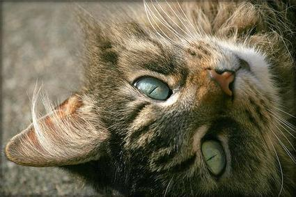 100% Natural Cat Litter with Superior Odor Control | Information on Cat Litter | Scoop.it