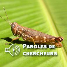 Recensement des arthropodes au Panama, par Yves Roisin, Evolution biologique et Ecologie | EntomoNews | Scoop.it