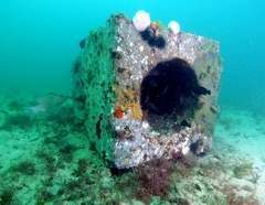 Artificial reefs: Better for fish or fishermen? | All about water, the oceans, environmental issues | Scoop.it