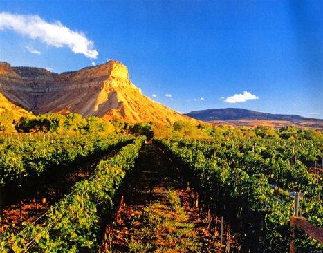 Widening the View of U.S. Wine Scene | Vitabella Wine Daily Gossip | Scoop.it