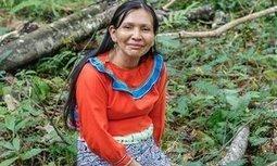 アヤワスカは人類の環境意識を変える 'Ayahuasca is changing global environmental consciousness' - ガーディアン   Ayahuasca  アヤワスカ   Scoop.it