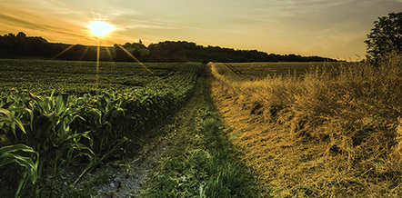 The Dupont food security index 2014 | Life on the margins | Scoop.it