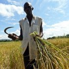 West African farmers 'already adapting to climate change' - SciDev.Net | adapting to climate change | Scoop.it