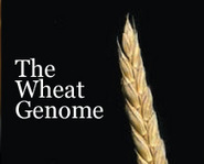 Slicing the wheat genome | Plant Gene Seeker -PGS | Scoop.it