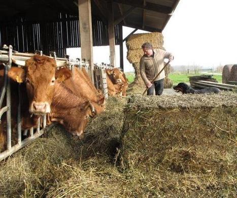 Les bio sont heureux et le font savoir | Pour une agriculture et une alimentation respectueuses des hommes et de l'environnement | Scoop.it
