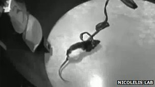 Brain implants give rats an  'acquired sixth sense', enabling them to detect infrared light | Amazing Science | Scoop.it