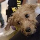 Social media platform provides dog-sitting service   pet sitter woodstock   Scoop.it