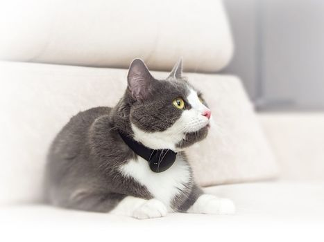 Moggie - smart collar and mobile app for cats | Quantified Pet | Scoop.it